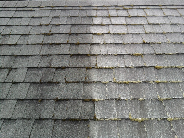 Moss Control Methods Portland Roof Cleaning